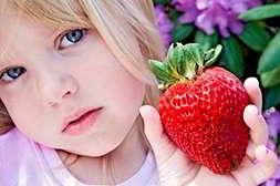 Домашняя ягодница отличается хорошим качеством