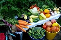 Овощи выращенные с удобрением бифогум