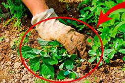 Средство Биогард убивает до 400 видов сорняков