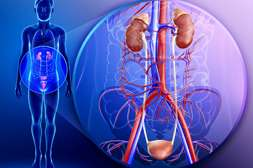 Уромин оказывает антибактериальное и противовоспалительное действие.