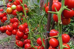 Удобрение Агрохелс работает в любых климатических условиях.