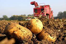 Агрохелс обеспечивает высокие урожаи.