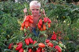 С препаратом Грундор повышается урожайность.